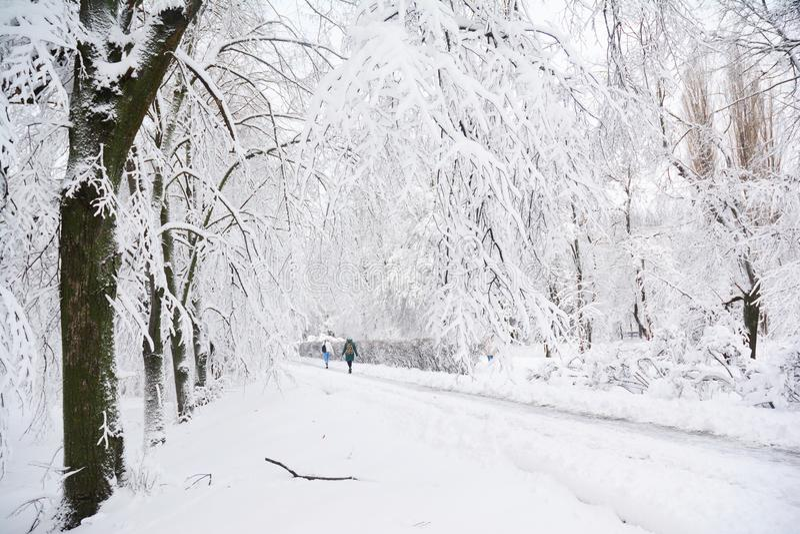 雪风暴下落8英寸雪在纽约 库存照片