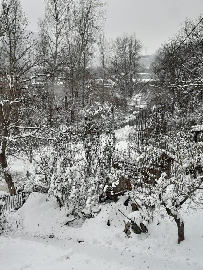 雪fary传说 库存图片