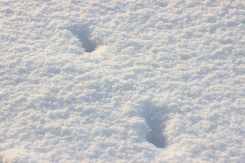 雪snowbank在一好日子 在阳光下蓬松雪淡光,抽象自然图 图库摄影