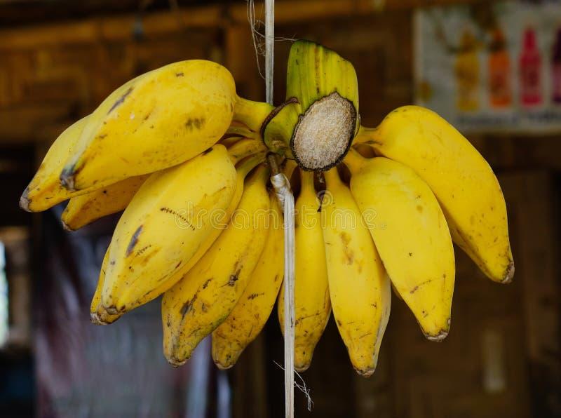 零售的耕种的香蕉在水果市场上 免版税库存照片