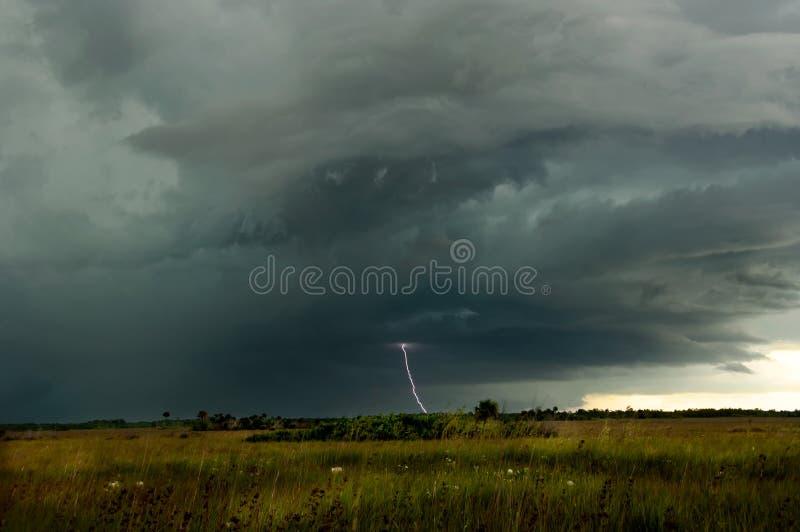雷和闪电在大Cyp猛冲在沼泽地陷入沼泽 免版税库存照片
