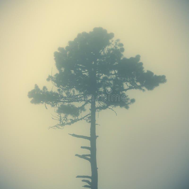 雾中孤树 免版税库存照片