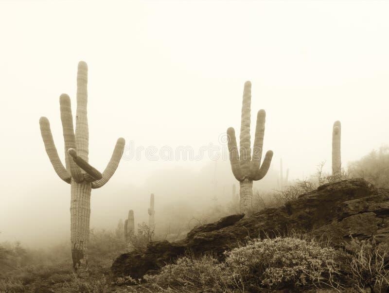 雾中沙瓜罗 库存照片