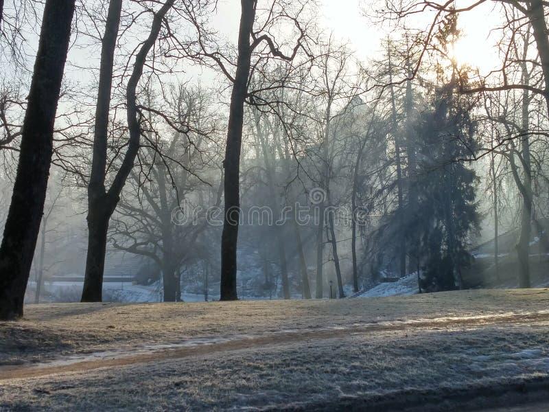 雾和霜在森林 免版税库存照片