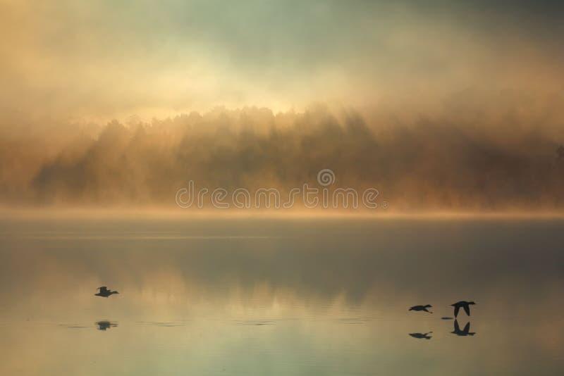 雾和鸭子在明尼苏达早晨 免版税库存图片