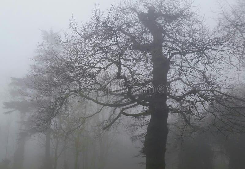 雾在公园 免版税图库摄影