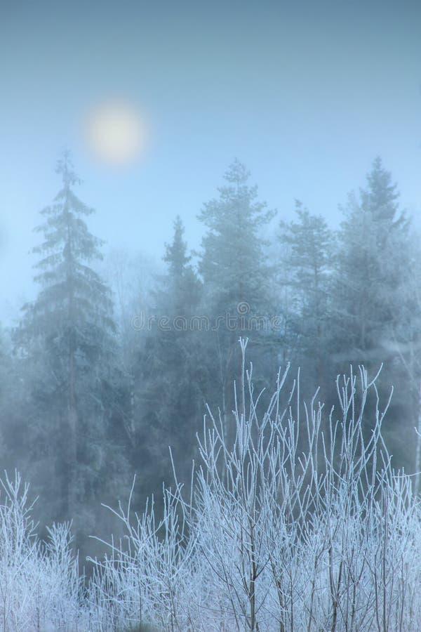 雾在冬天森林里 免版税库存照片