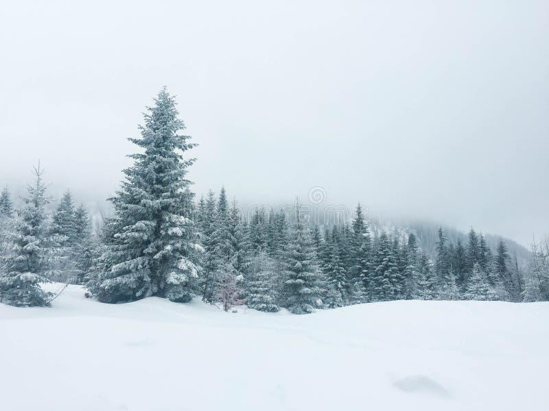 雾在山森林里 免版税库存照片