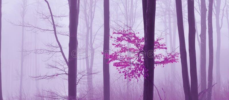 雾在森林色的神秘的背景中 不可思议的forestMagic艺术性的墙纸 童话 梦想,线 在有雾的树 免版税库存图片
