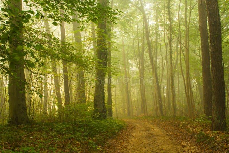 雾在森林里 库存图片