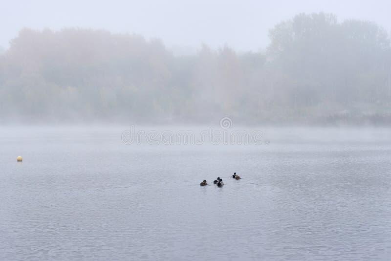 雾在湖的秋天 库存照片
