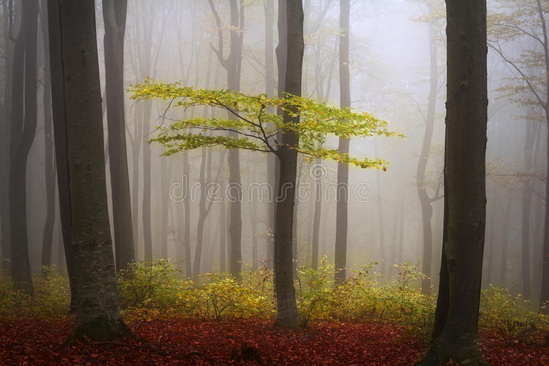 雾在秋天期间的森林里 库存图片
