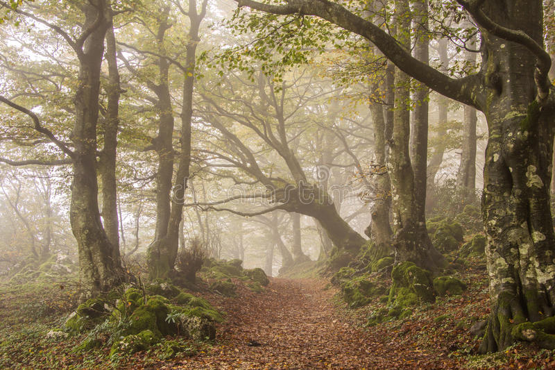 雾在秋天森林里 免版税库存图片