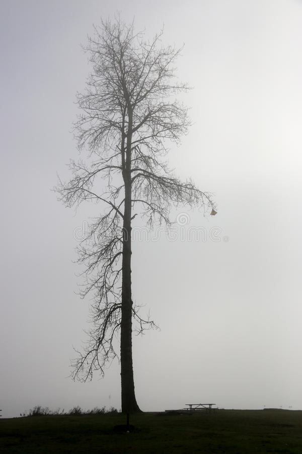 雾孤立结构树 图库摄影