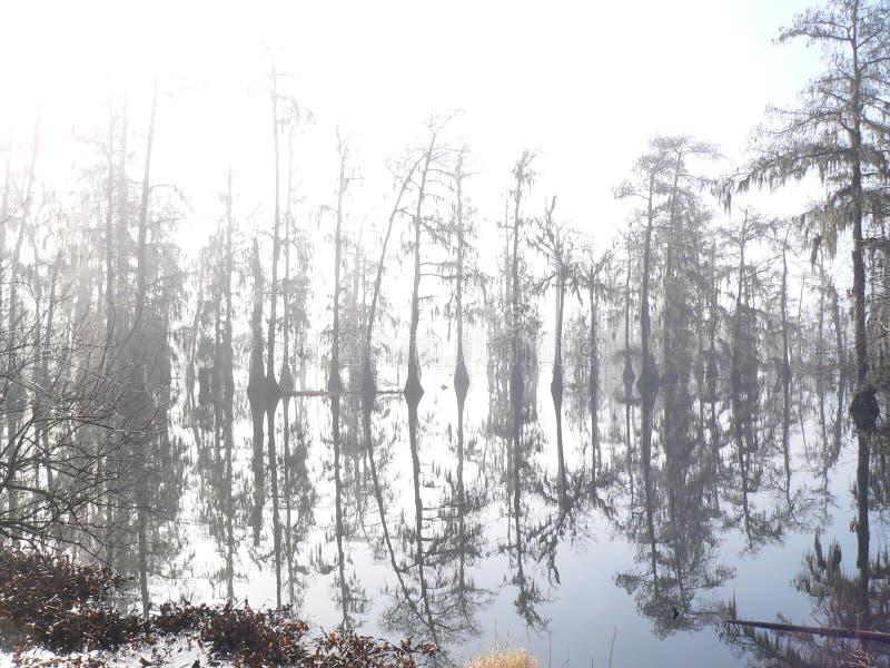 雾早晨沼泽 库存图片