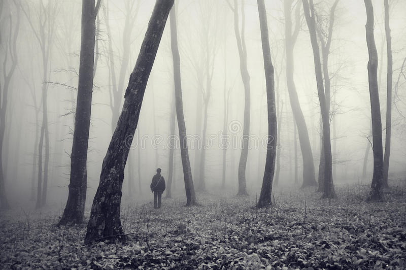 雾森林人神奇奇怪 免版税库存照片