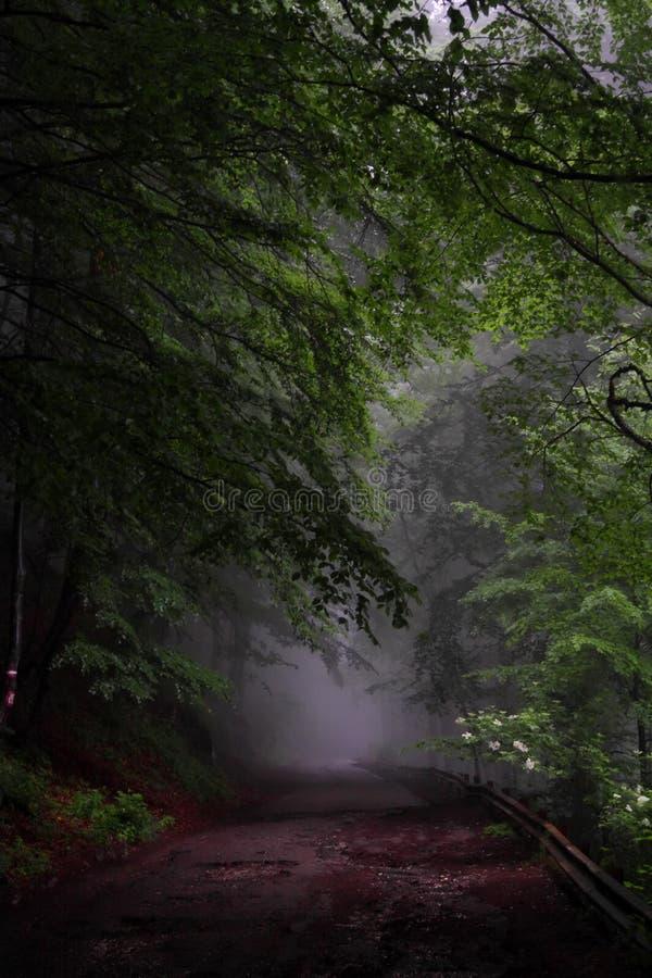 雾森林公路 免版税库存图片
