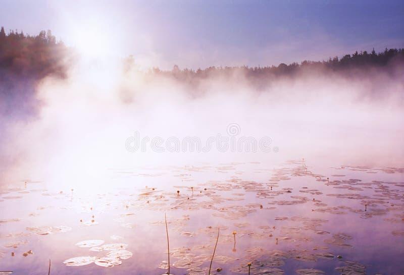 雾森林卡累利阿通配湖的早晨 图库摄影