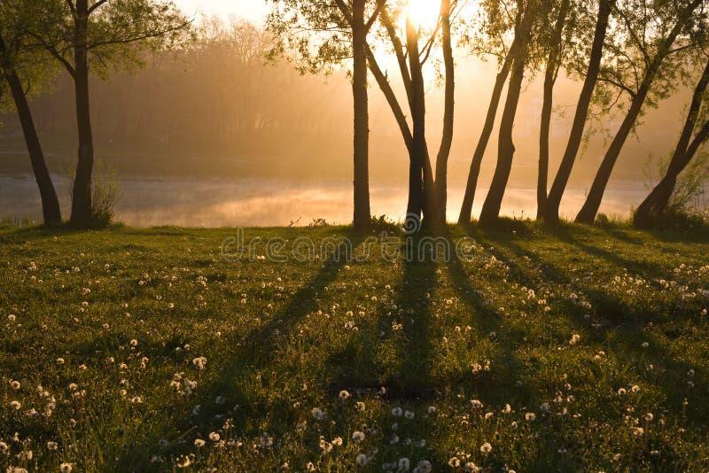雾森林湖 免版税库存图片