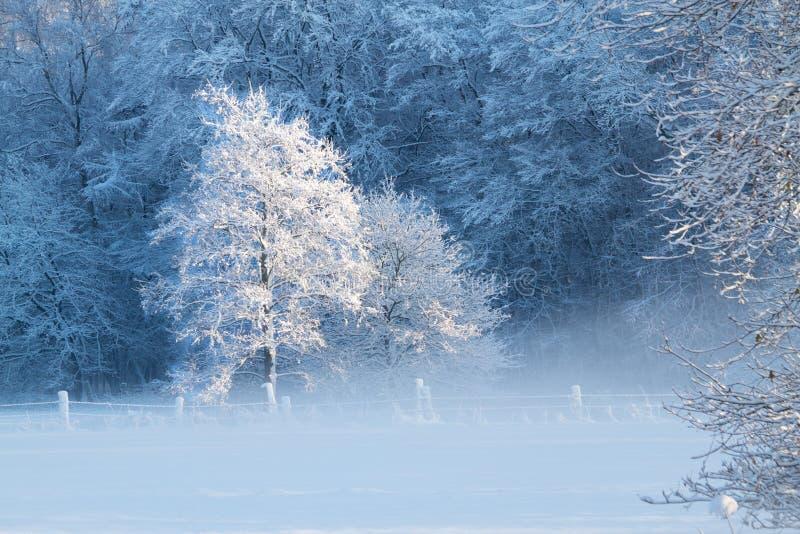 雾横向冬天 免版税库存照片
