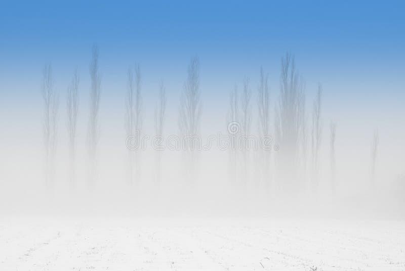 雾白杨树 库存图片