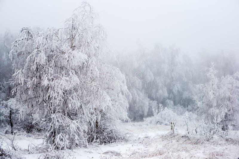 雾的圣诞节神奇冬天多雪的森林, 免版税库存照片