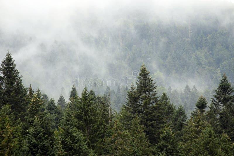 雾的山森林 免版税库存照片