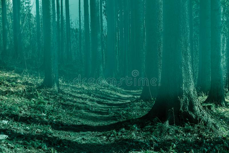 雾的神仙的森林 秋天森林 雾的被迷惑的秋天森林早晨 老结构树 与树五颜六色的绿色的风景 免版税图库摄影