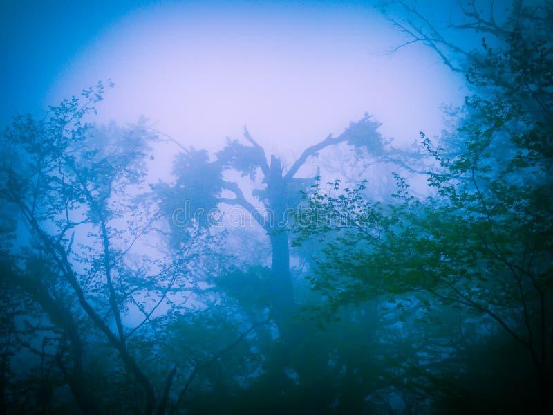 雾的神奇森林 图库摄影