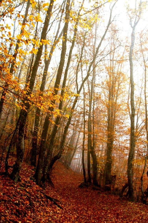 雾的神奇秋天森林 森林足迹 库存图片