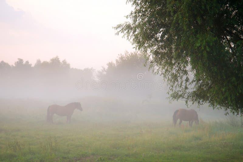 雾的草甸 免版税库存图片