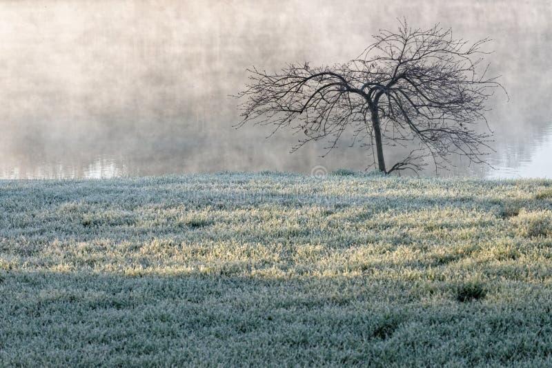 雾的, Corbeanca,伊尔福夫县,罗马尼亚冻草原 图库摄影