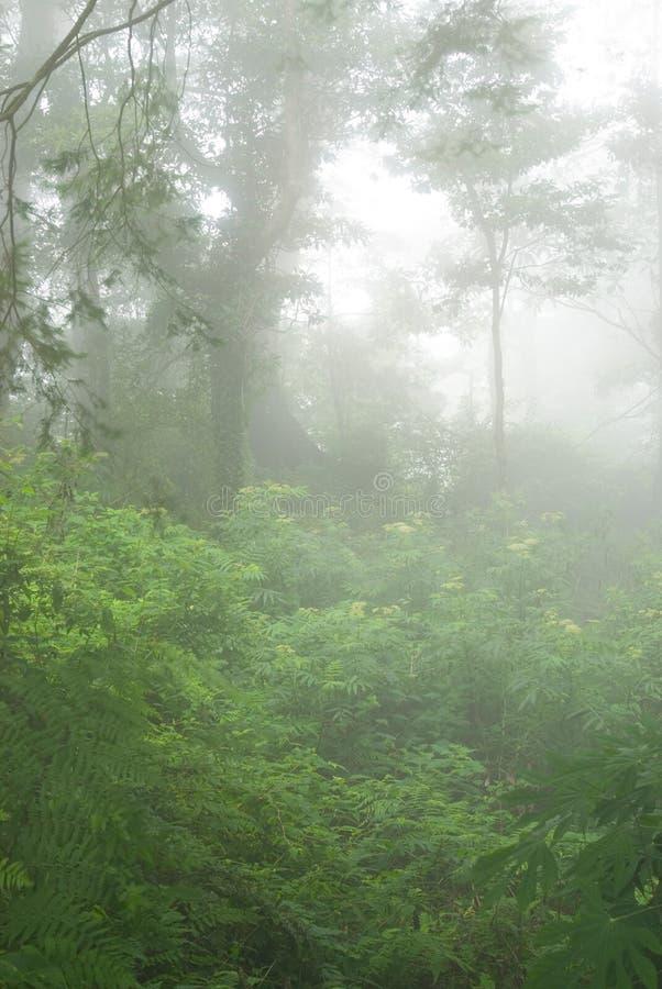 雾自然森林地 免版税图库摄影
