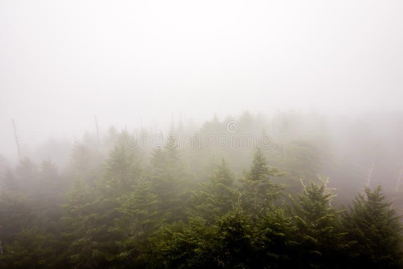 雾追上森林 库存图片