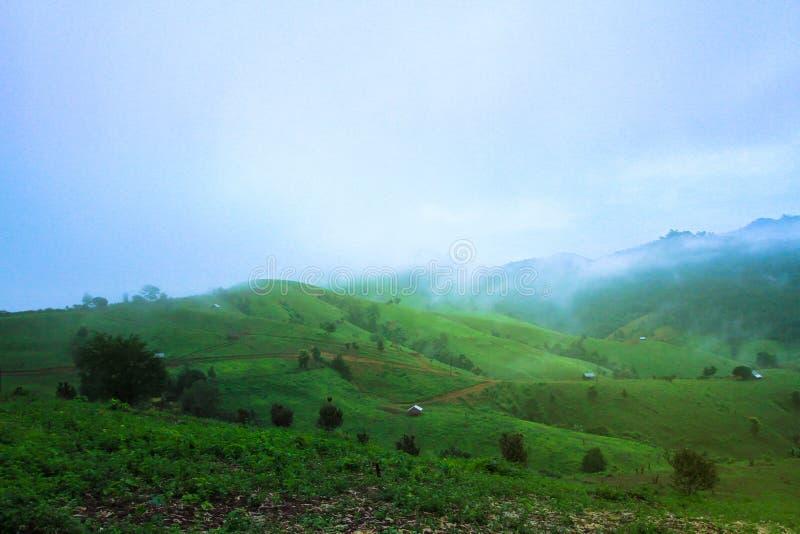 雾,日出-黎明,热带气候,茶庄稼,泰国 库存图片