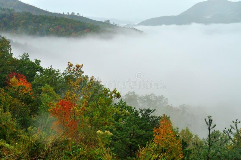 雾说谎在一个谷在大烟山 免版税库存图片
