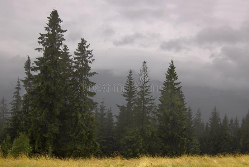 雾zakopane 库存图片