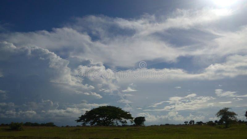 需要天空和树一起 免版税库存照片
