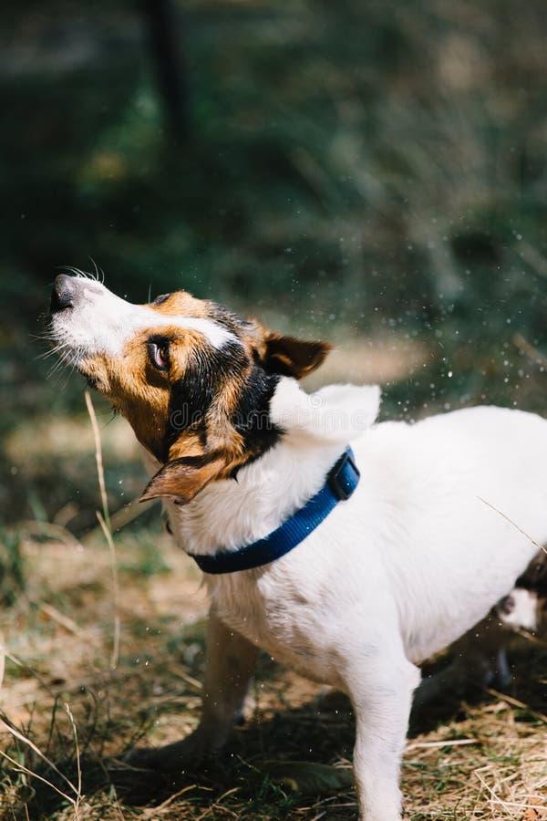 震动下来从下落的狗 免版税库存照片