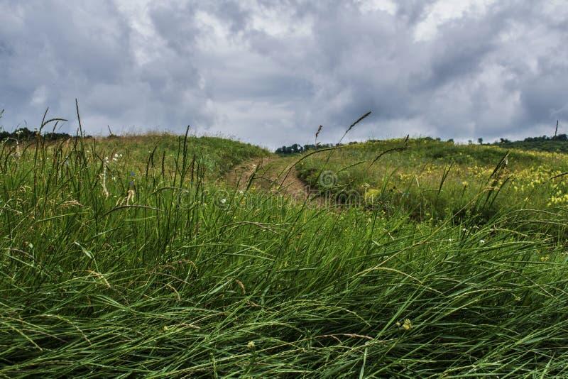 震动大麦的风 库存照片