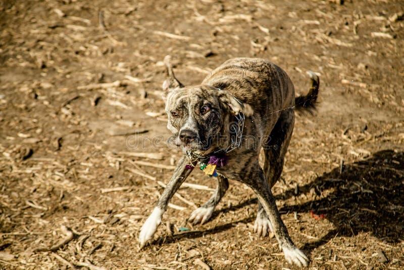 震动狗 库存图片