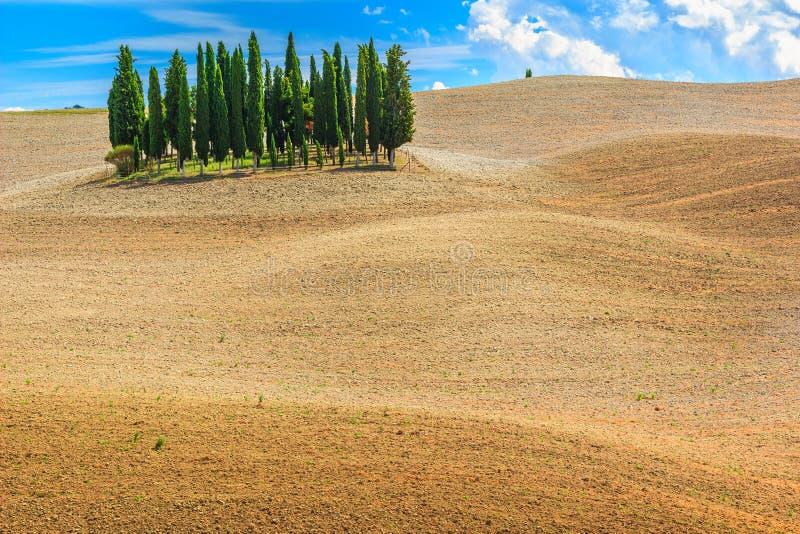 震惊托斯卡纳环境美化与柏树在锡耶纳,意大利,欧洲附近 库存图片