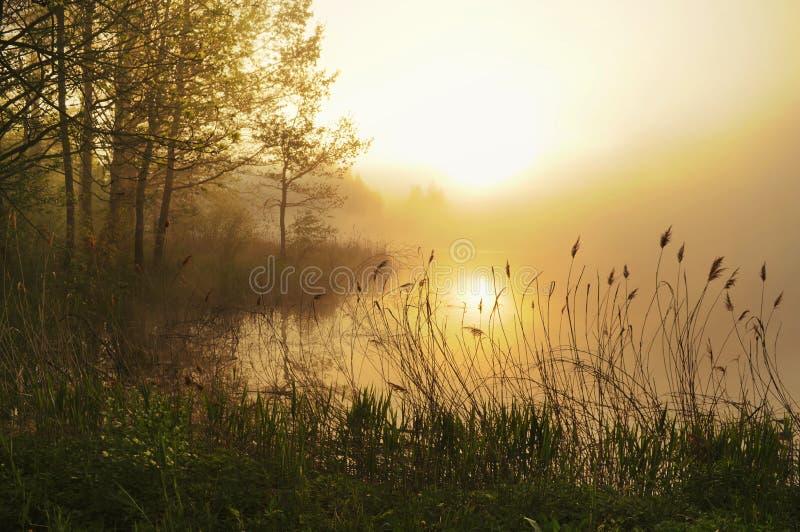 震惊有雾的横向 库存照片