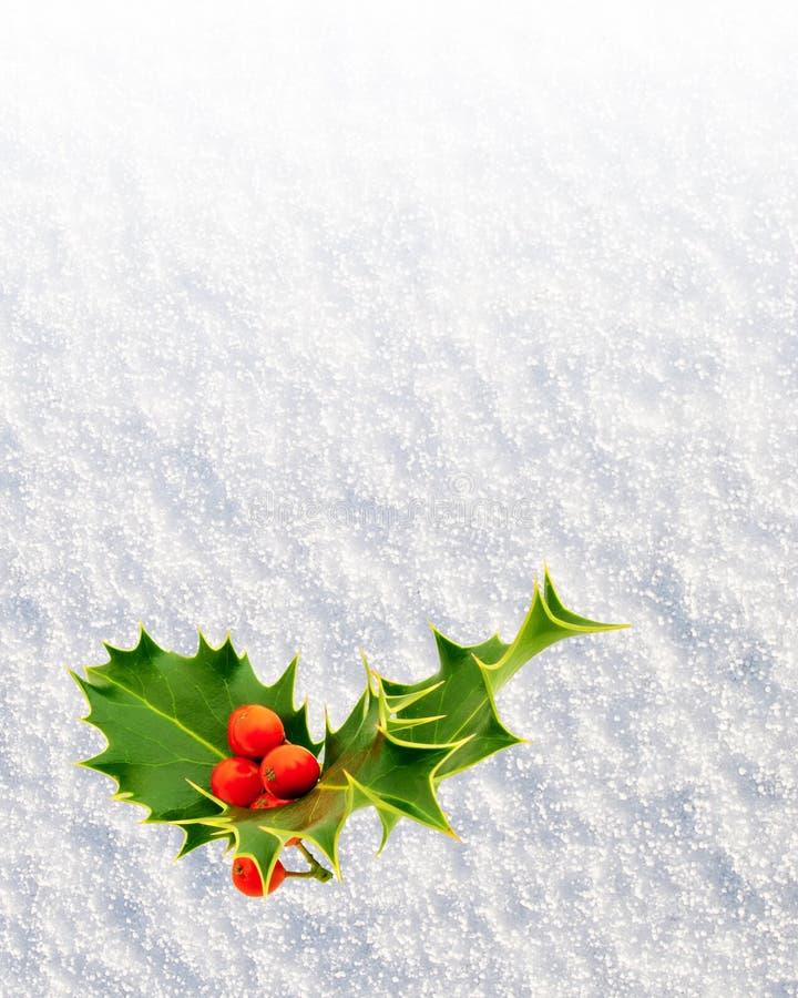 Download 霍莉 库存照片. 图片 包括有 圣诞节, 例证, 本质, 装饰, 符号, berrying, noel, 工厂 - 62533290