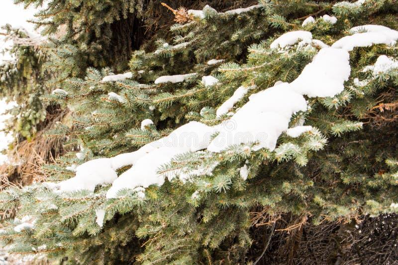 霜冬天风景的森林 积雪的树 免版税库存图片