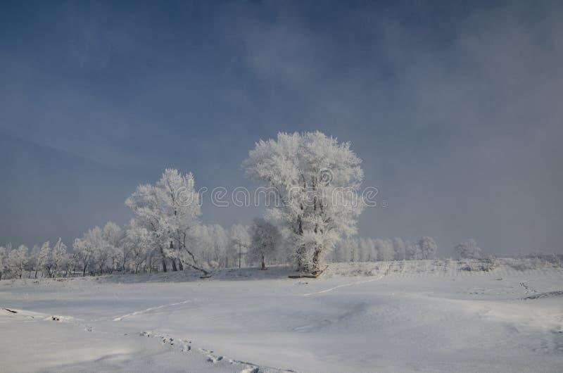 霜在冬天 免版税库存照片