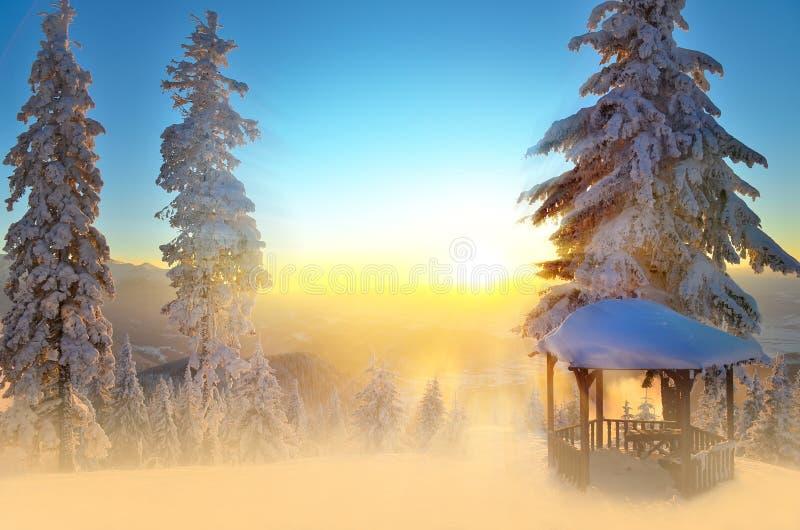 结霜早晨明信片被反射的霜河光亮的雪星期日晴朗的结构树冬天 库存照片