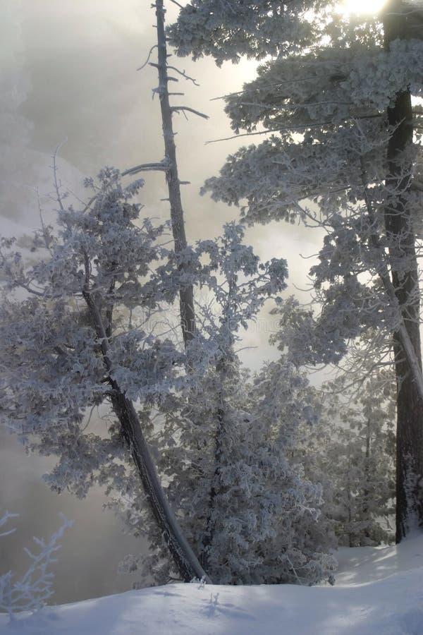 霜灰白结构树 库存图片