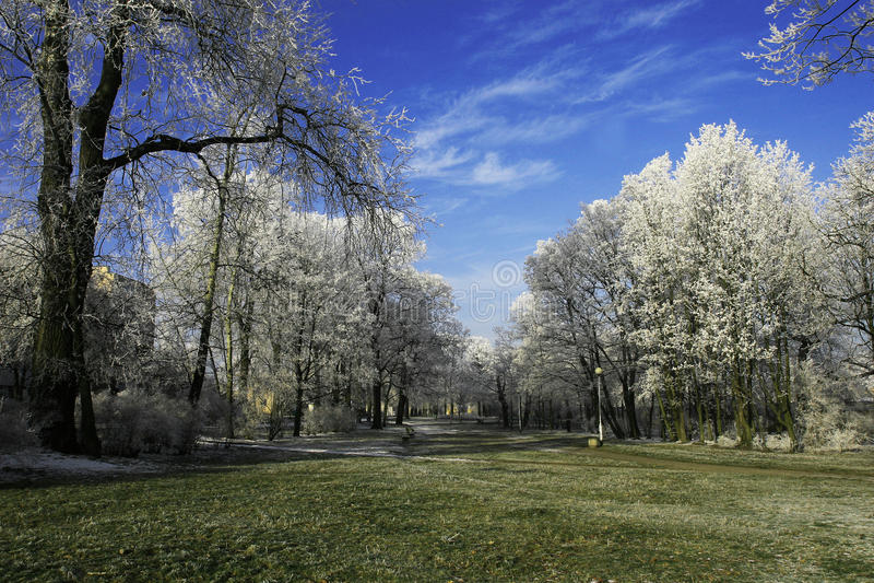 结霜的公园 免版税库存图片