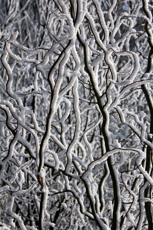 结霜的树枝 库存图片